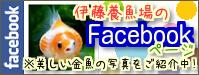 伊藤養魚場Facebookページ