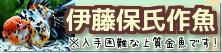 在庫紹介【伊藤保氏作魚】