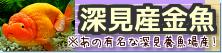在庫紹介【深見産金魚】