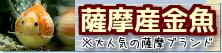 在庫紹介【お薩摩産金魚】