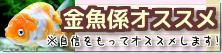 在庫紹介【金魚係オススメ】