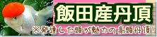 在庫紹介【飯田産丹頂】