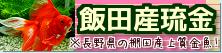 在庫紹介【飯田産琉金】